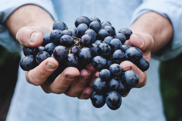 Bundeena Organics - Giving is Rad!