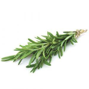 Organic Rosemary - Bundeena Organics