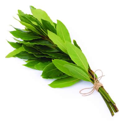 Organic Bay Leaves - Bundeena Organics