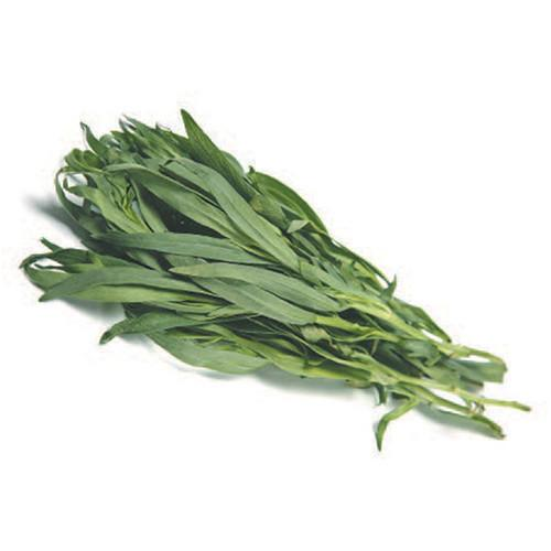 Organic Tarragon - Bundeena Organics