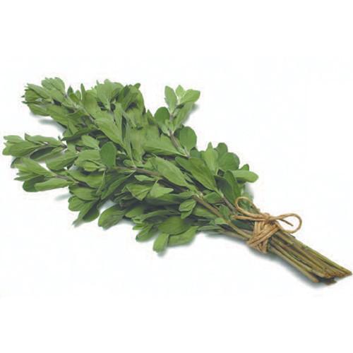 Organic Marjoram - Bundeena Organics