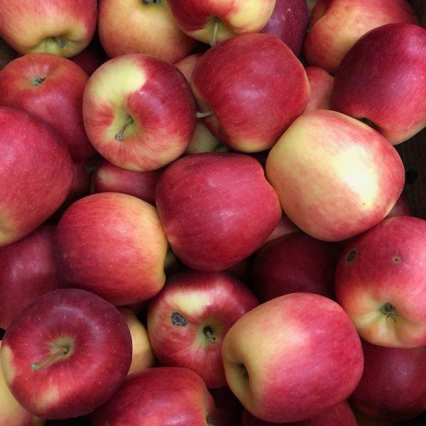 Organic Juicing Apples - Bundeena Organics