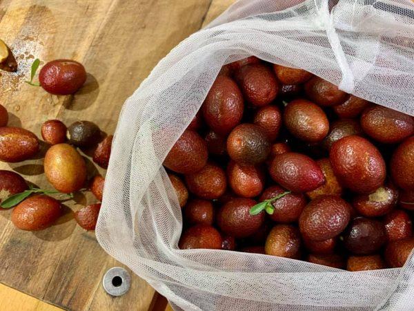 Organic Finger Limes - Bundeena Organics