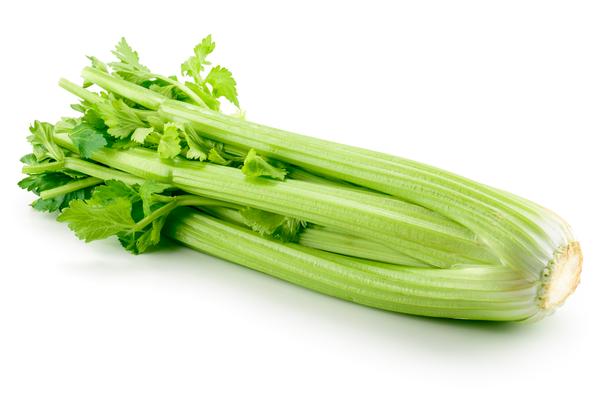 Organic Celery - Bundeena Organics