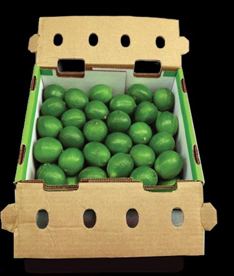 Organic Limes - Bulk 5kg Box - Bundeena Organics