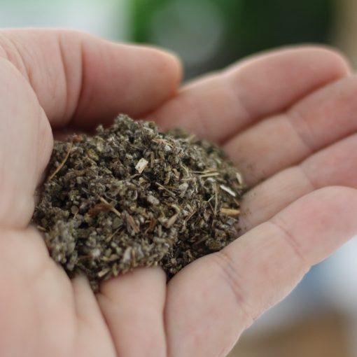 Organic Sage - Bundeena Organics