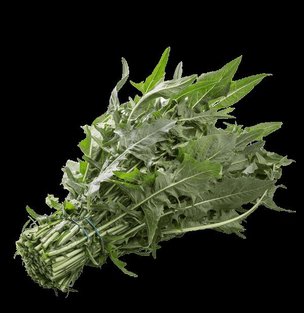 Organic Chicory - Bundeena Organics